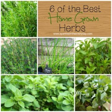 6 of the best home grown herbs!