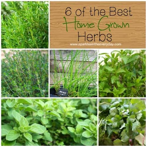 6 of the best home grown herbs! Most popular recipes and posts from 2016