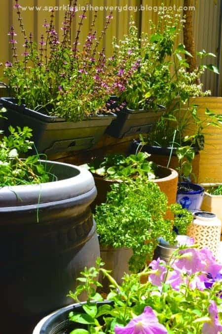tips for a rustic herb garden