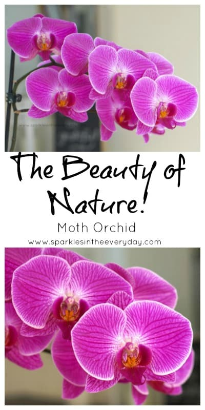 The Beauty of Nature and the Moth Orchid