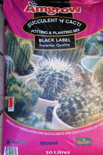 Succulent Potting Mix for the Tips to growing succulents inside!